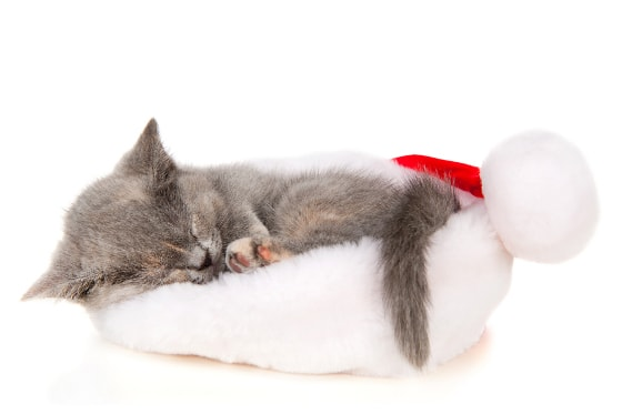 Santa's Sleepy Kitty