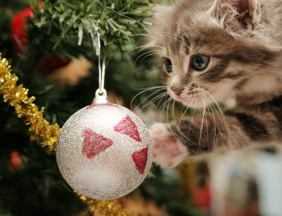 Christmas Tree Kitty