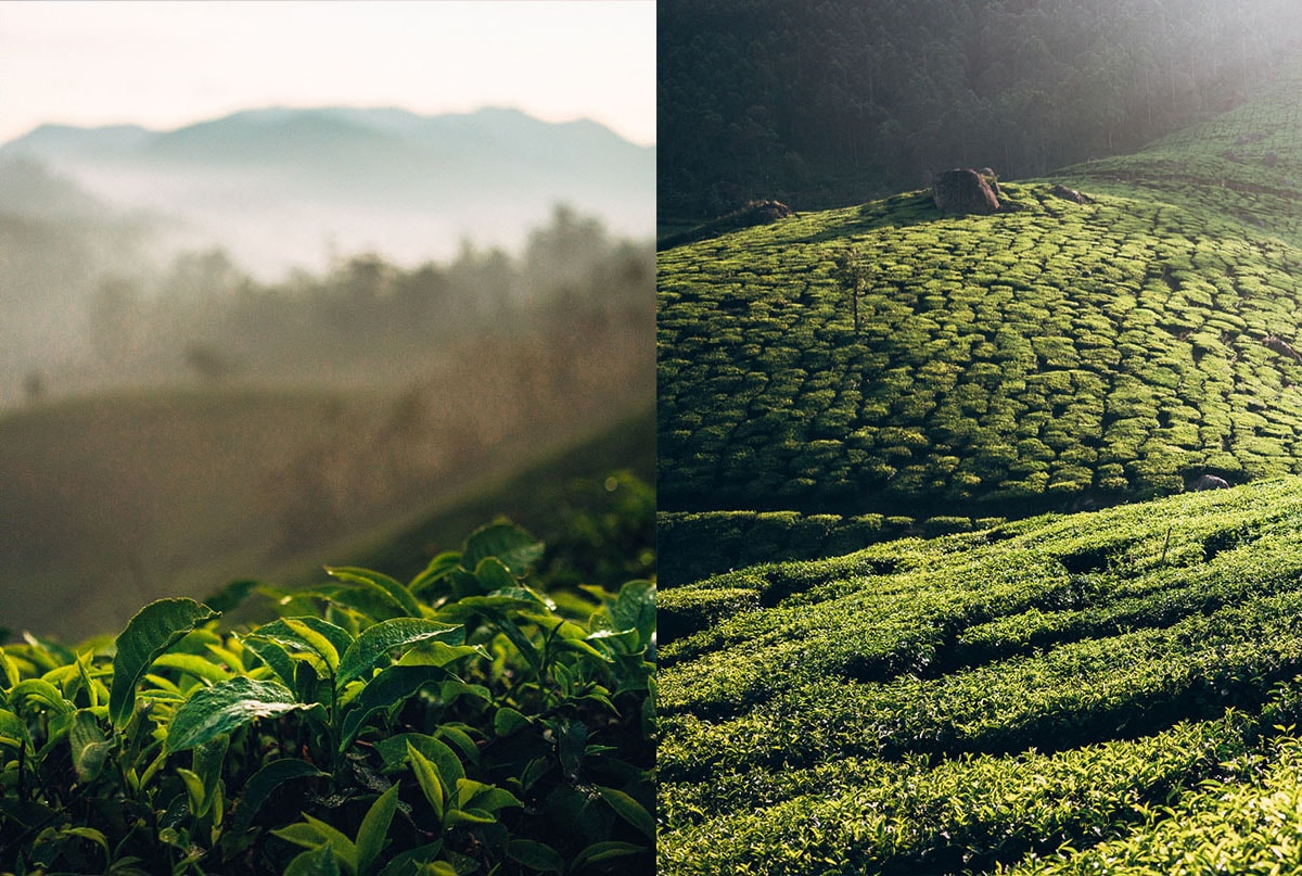 Side-by-side comparison of two images of hills. The one on the left is in focus, the one on the right has leaves in the foreground that are in focus, but the background hills are blurred.