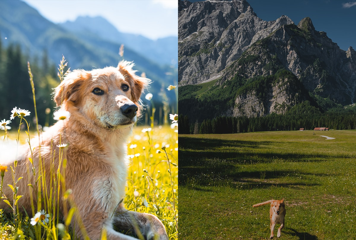 A side-by-side comparison of two photos of a dog. The image on the left is bright and the background is slightly blurred. The image on the right is darker but more in focus.