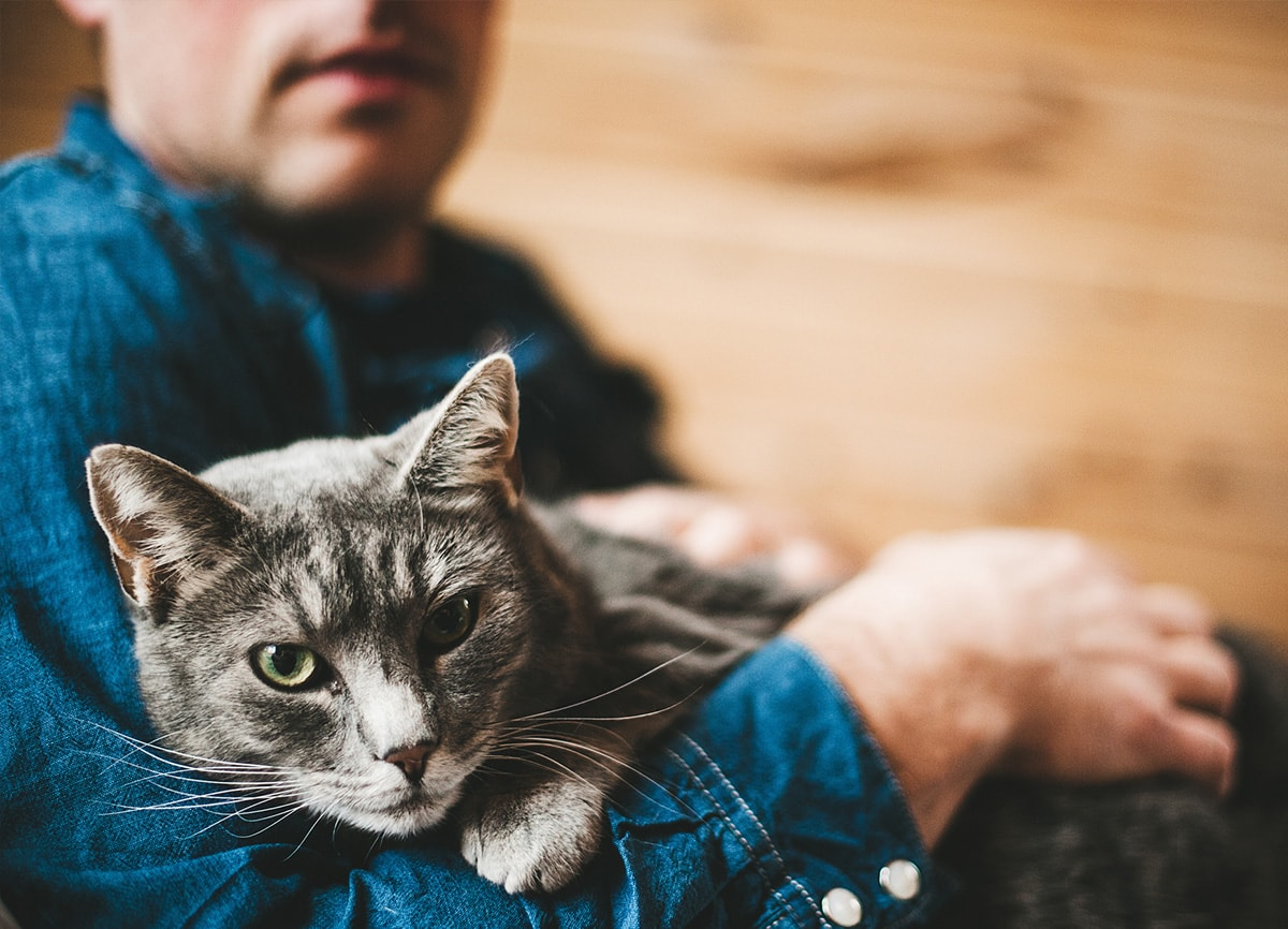 A man in a denim shirt holding a cat. The cat in the foreground is in focus, the man in the background is out of focus.