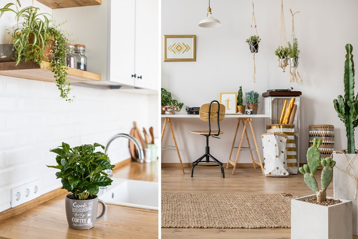 A photo split in two. The right side shows a light and airy office space in someone's home with a variety of house plants and cacti dotted around. The left side is a close-up of a mug used as a planter on a kitchen counter.
