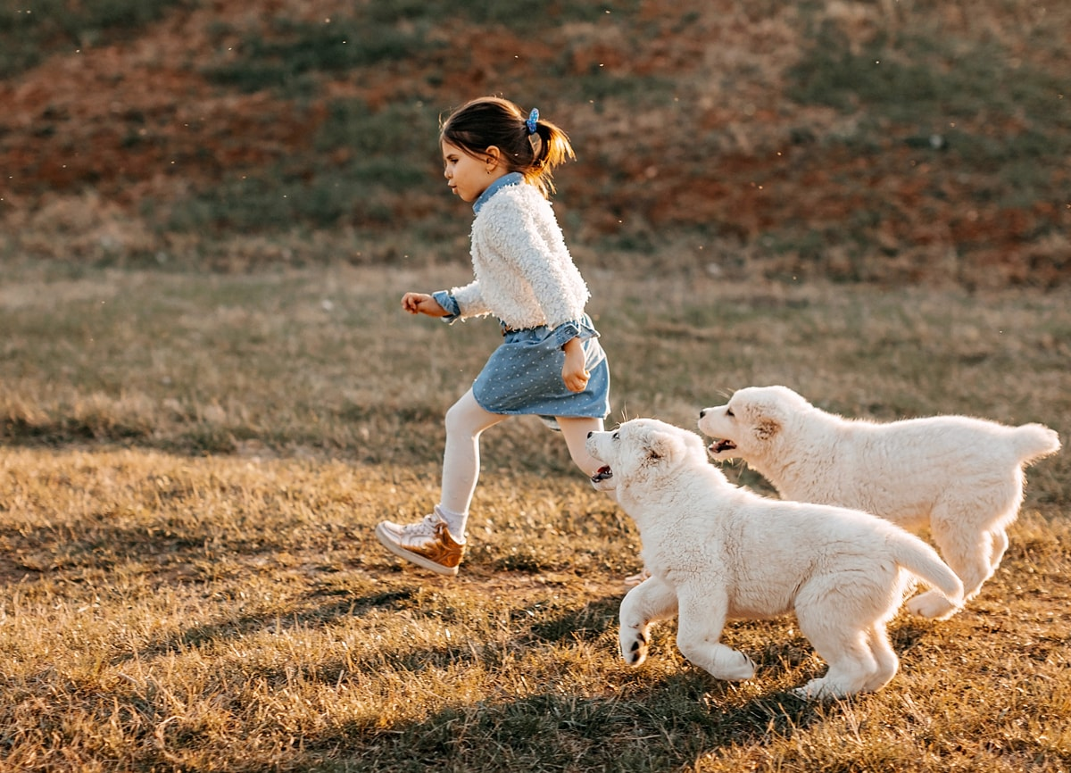 An action shot of a little girl and two dogs running around on a small grassy hill.