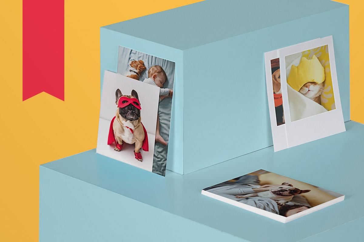Stacked square blue plinths with prints of pet photos on, including a French bulldog dressed as a superhero in a red cape.