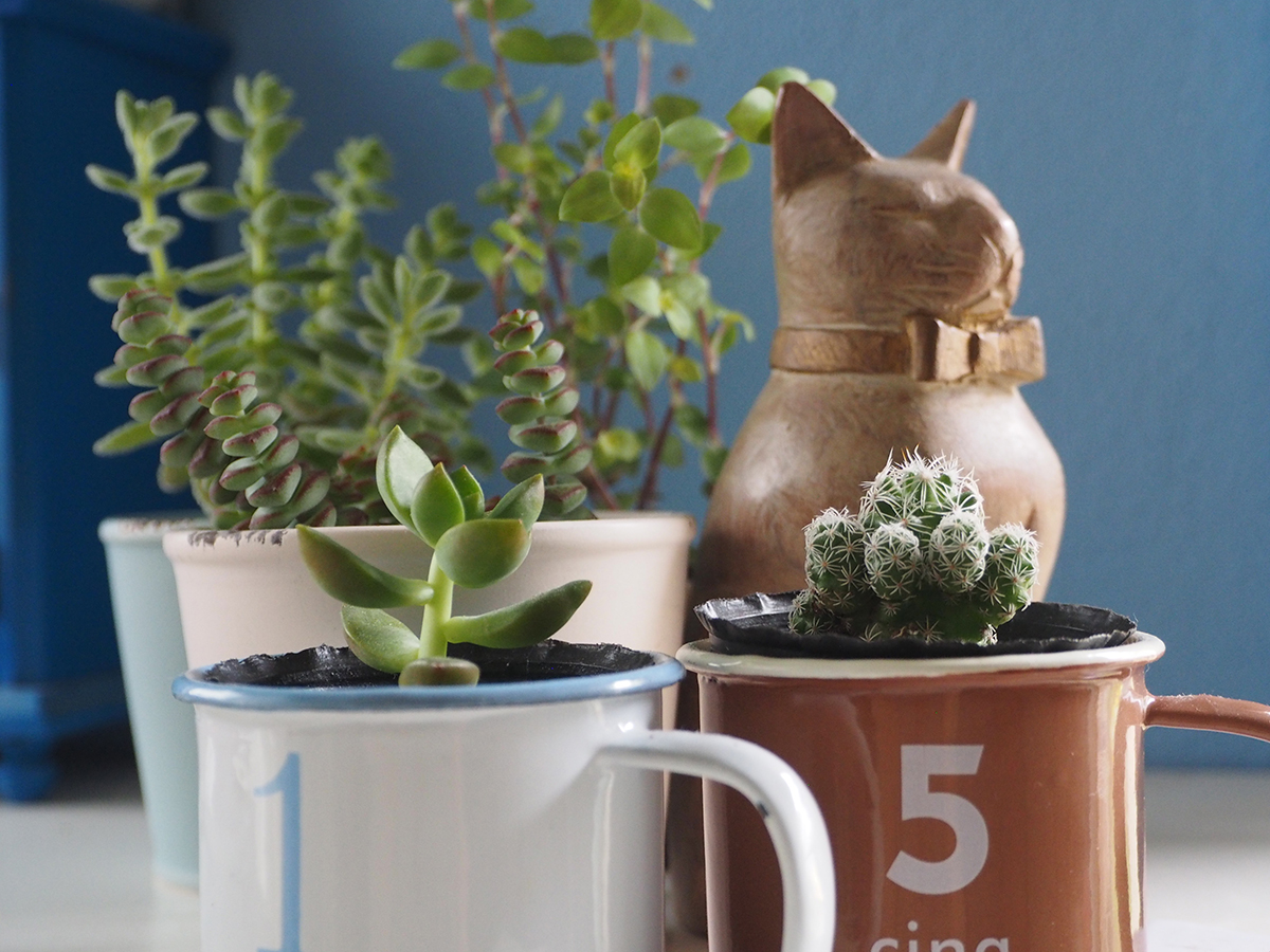 Mugs used as small plant pots with succulent plants and a cactus
